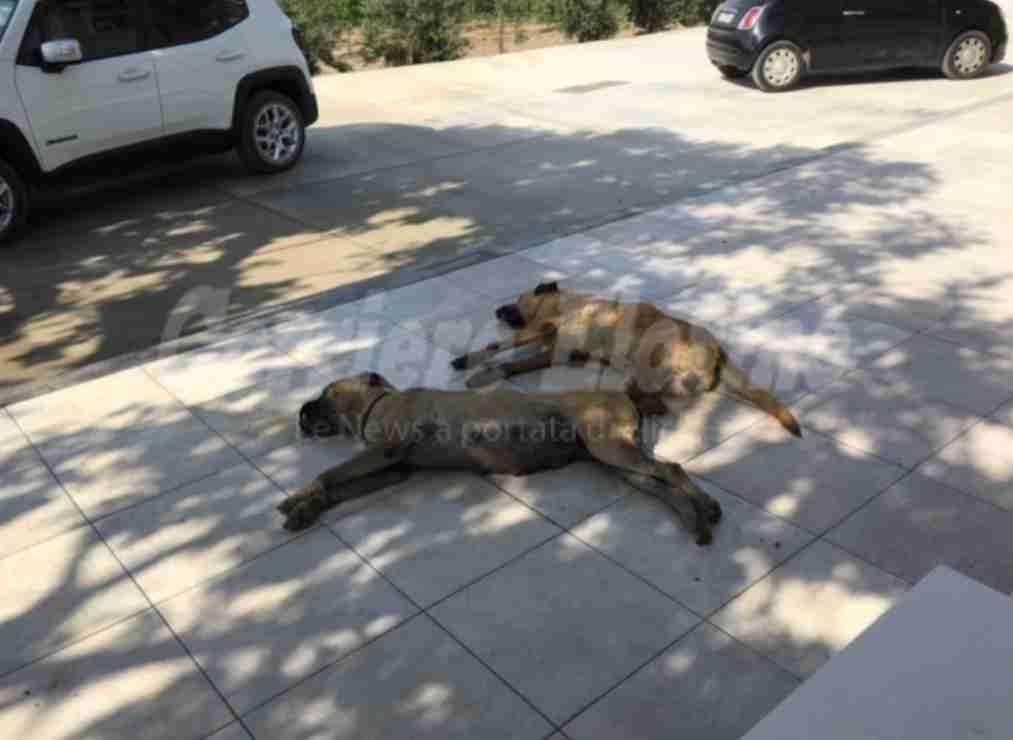 Morti avvelenati due cani del deputato Gennuso