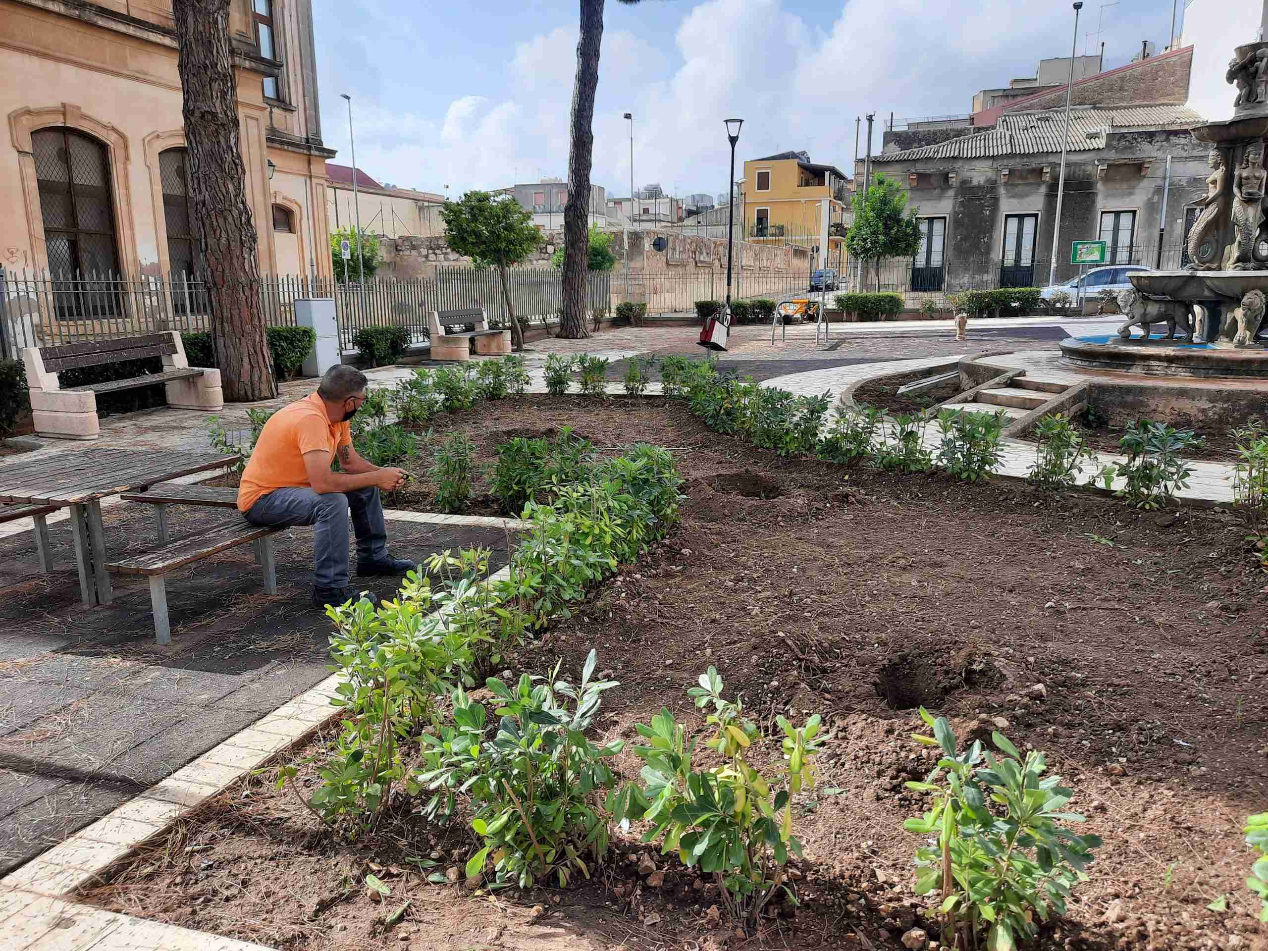Vile gesto al parco XXIV Maggio, rubati gli alberi di ulivo e una sterlizia appena piantati