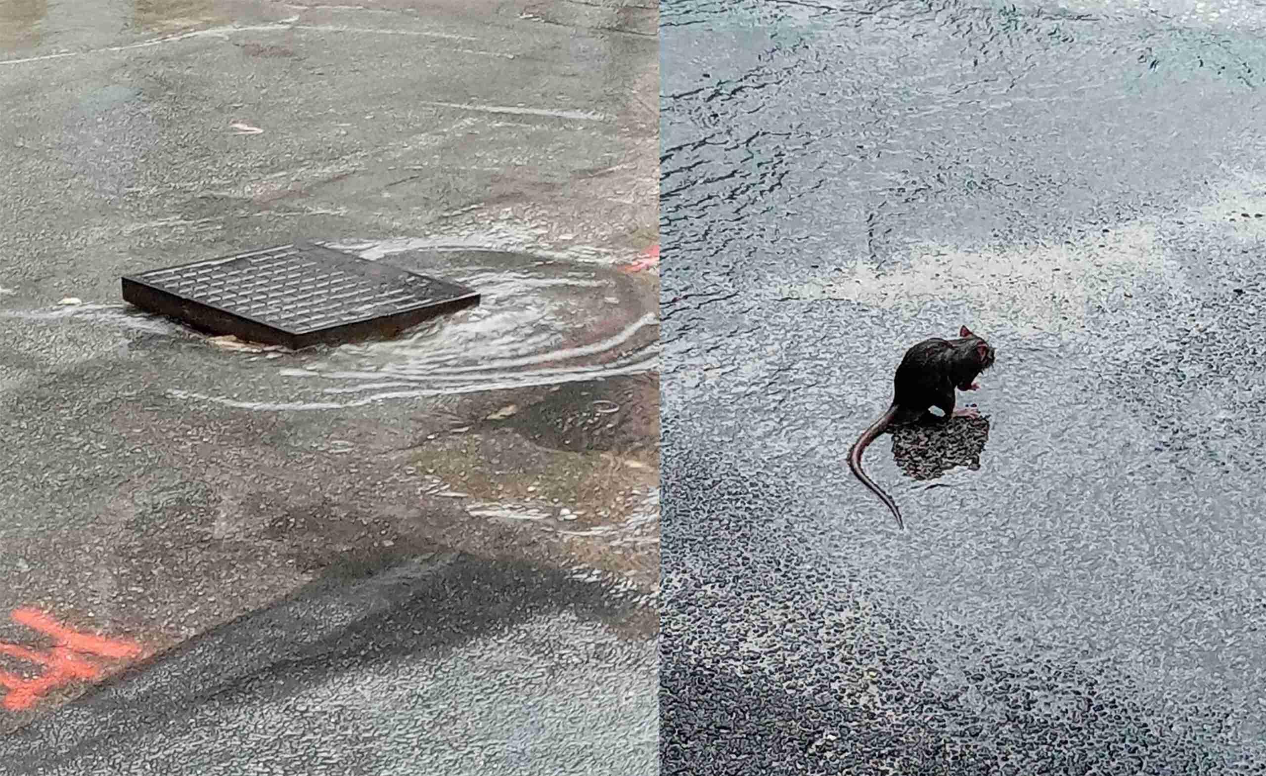 Prime piogge, vecchi problemi: strade allegate, tombini divelti e topi per strada